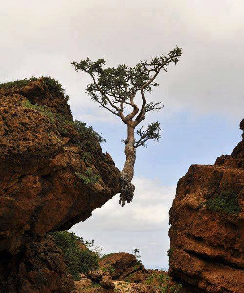 Image result for strength in nature