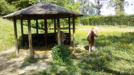 Walibi-rhones-alpes-idee-sortie-ete-2018-mini-ferme-poney-min