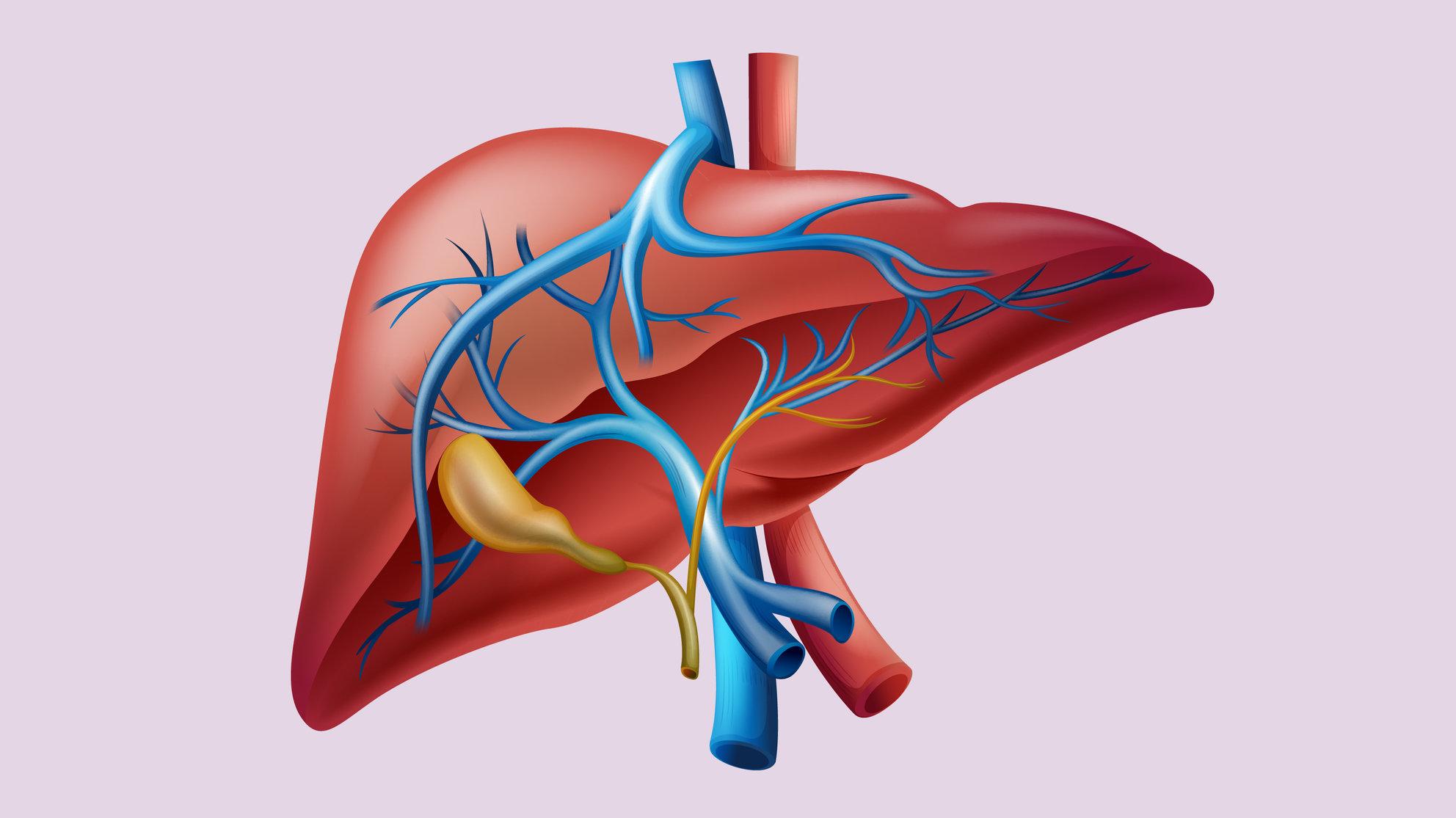 Liver Elevated Liver Enzymes Biopsy Procedures Damage Reversal