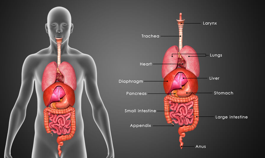 Stomach: Functions, Diseases, Stomach Ache