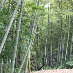 Etwas Bambus-Wald am Wegesrand