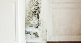 6 Easy Ways to Remove Black Mould