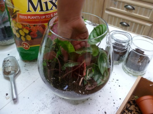how to make a terrarium the handy mano manomano planting plants