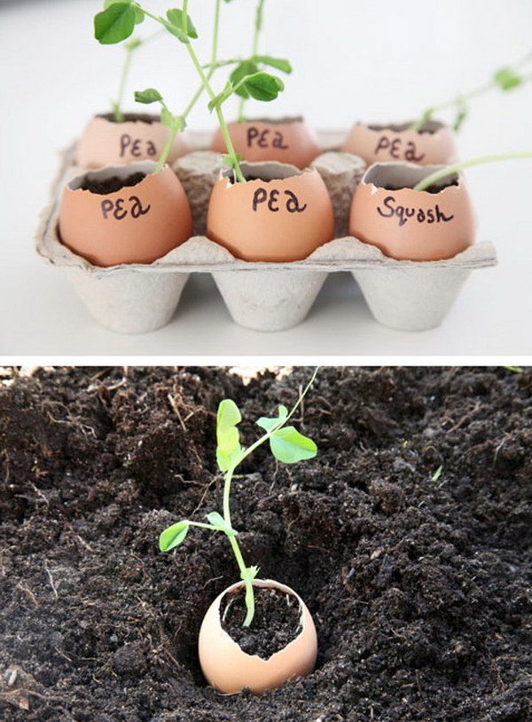 simple and cheap gardening tricks The handy mano manomano egg shells planting biodegradable soil ground protection