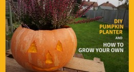 DIY Pumpkin Planter and How to Grow Your Own