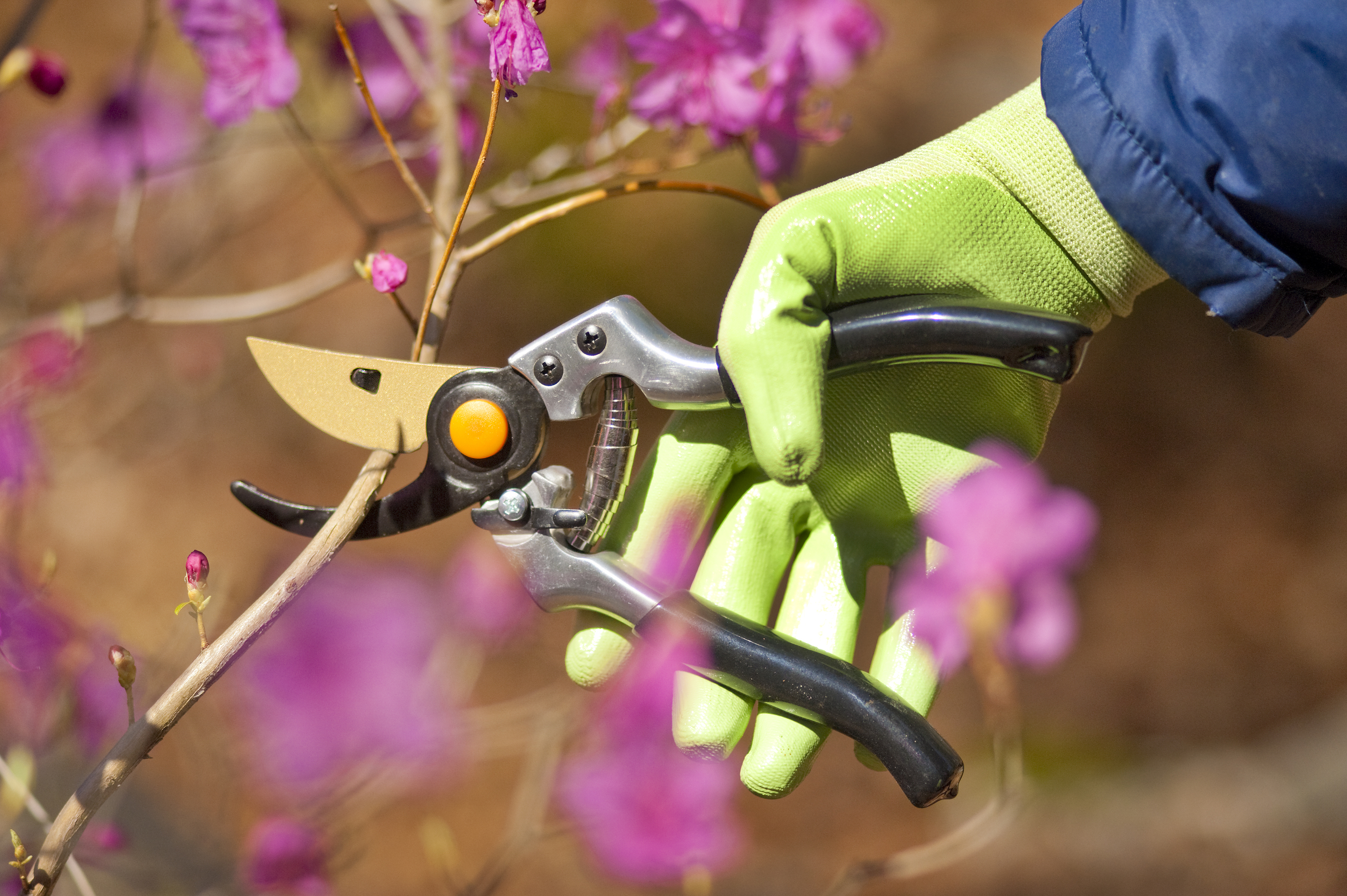Essential Gardening Jobs for January thehandymano the handy mano manomano winter cutting back flowers stems gloves