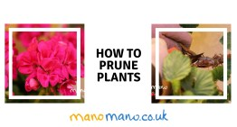 How to prune plants