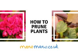 manomano the handy mano how to prune plants cover photo prune roses