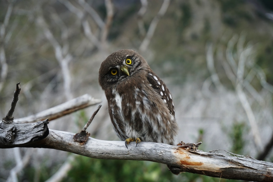 Owl on branch