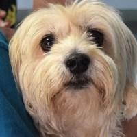 ¿Qué es la leptospirosis canina y cómo podemos tratarla?