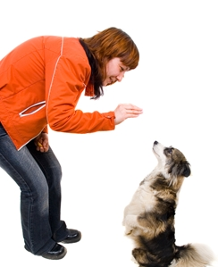 Want to improve your office productivity and employee morale? Think like an animal trainer.