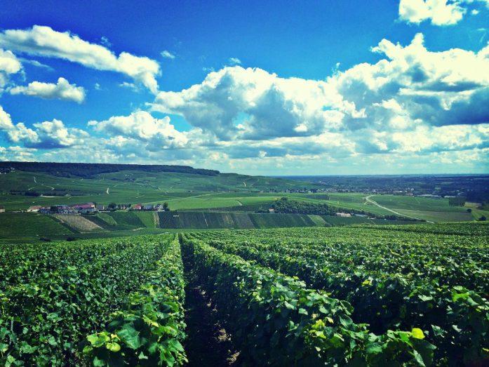 Viinipeltoja Route de la Champagnen varrella.