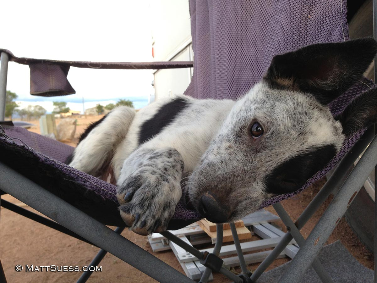 By late July, Scrappy already had his own chair outside my RV.