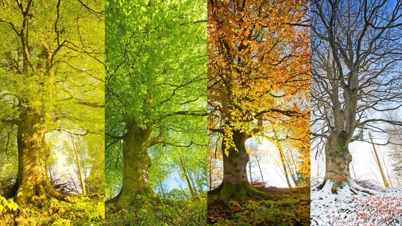 Seasons Of Changes