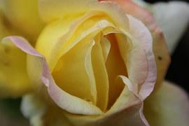 flowers-1003464__180