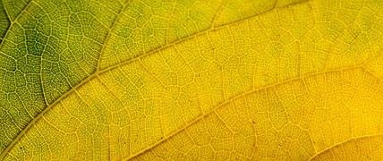 leaf-1013122__180