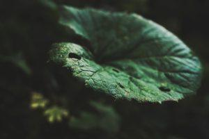 leaf-984067_640