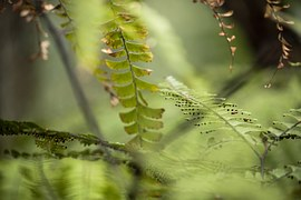 plant-741656__180