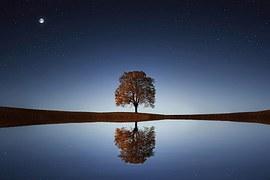 tree-838667__180