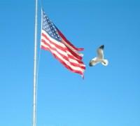 a bird and a flag