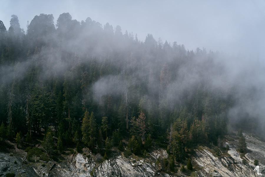 MLEE-CousinCampingSequoiaNP-057