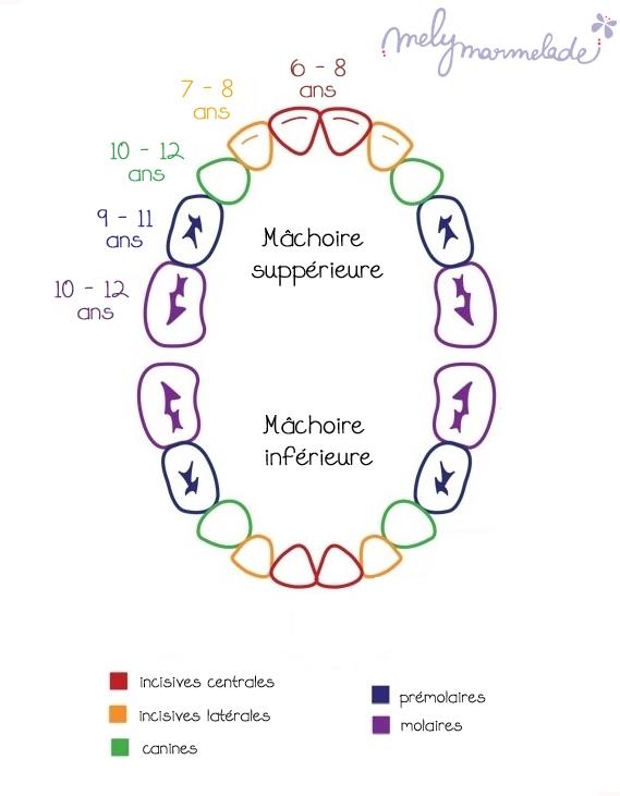 Chute des dents