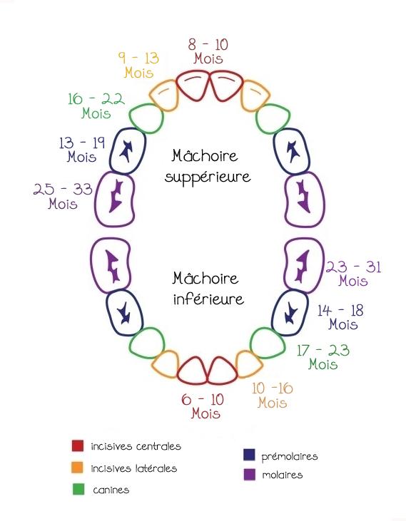 Pousse des dents1