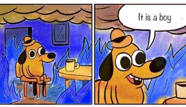 gender reveal this is fine