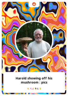 harold.13