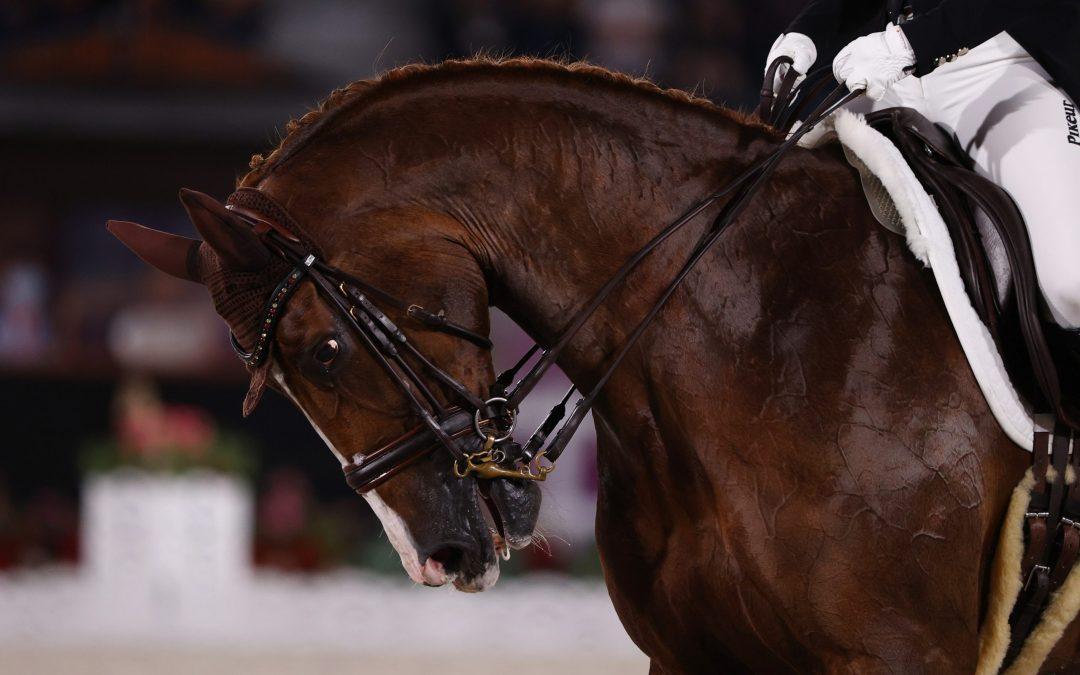 Trke konja- konjički sport