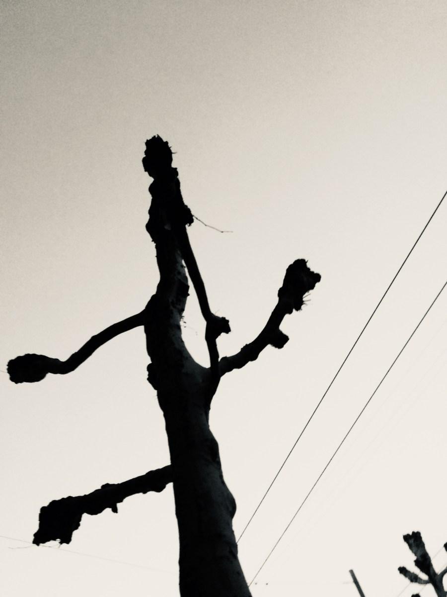 arbre avenue Ouchy