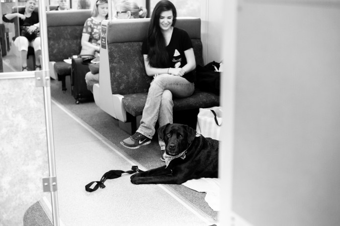 Penny the dog lays down in the GO train.