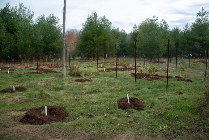 A field of young trees and saplings in a field in Rouge National Urban Park