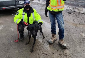 Photo of animal services with Boomer