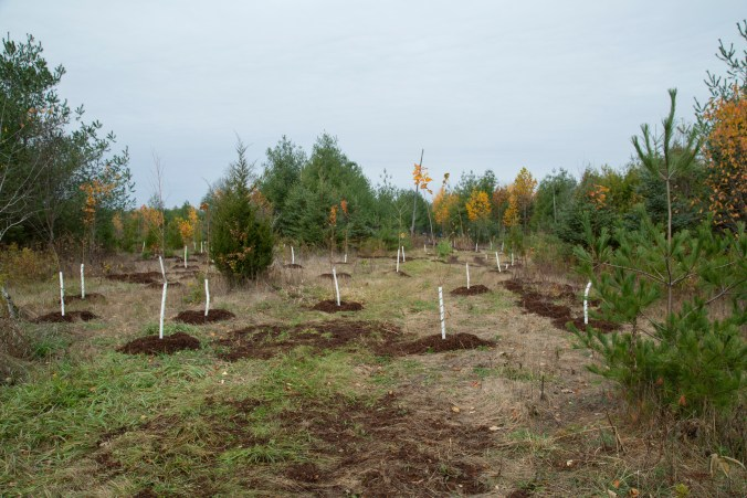 Image shows several new trees being planted.