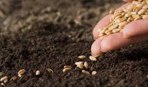 L12.imm.2- mano che semina terra chicchi
