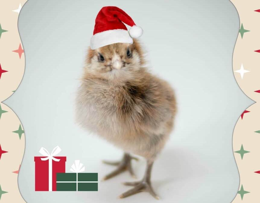 9 Gifts for Chickens this Holiday Season