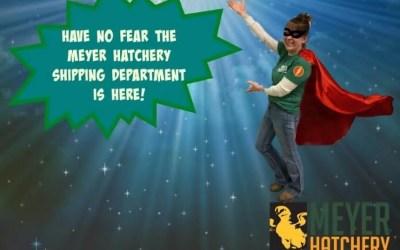 Meet the Meyer Hatchery Shipping Superheroes