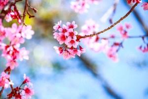 7777120920_le-printemps-est-la