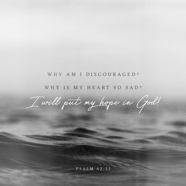 Psalms 42:11 NLT
