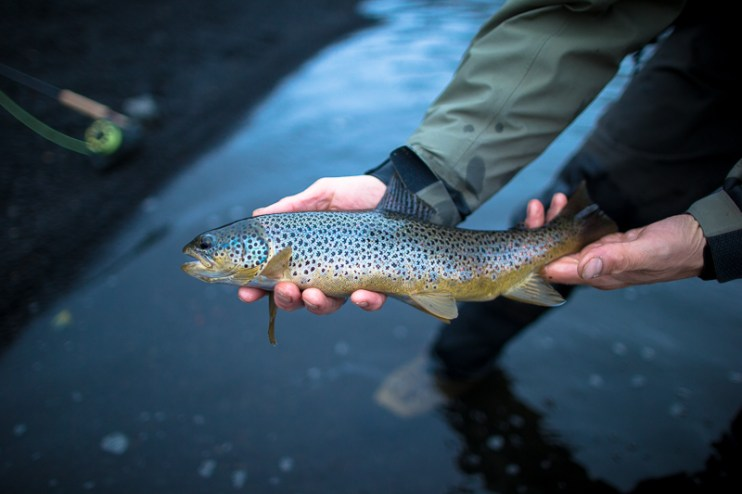 Iceland Trout TMD June 2014 FB-826