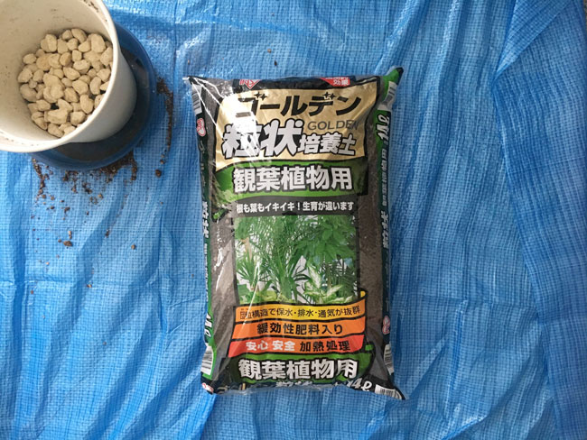 コーヒーの木の植え替えに使用した観葉植物用ゴールデン粒状培養土