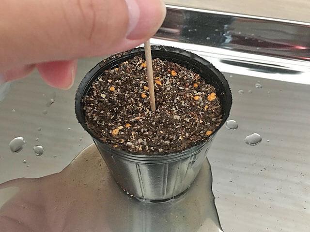 つまようじで挿し穂の太さに穴をあけた挿し床