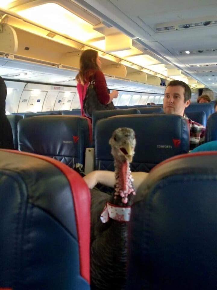 Turkey time on a plane.