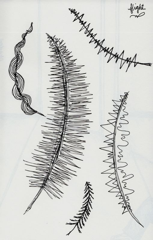 Sketches of feathers with different ideas for the feathers like a heartbeat graph, tree branches, wire, mountains and lakes