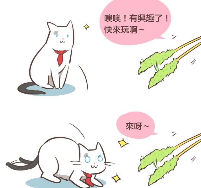 #77 逗貓