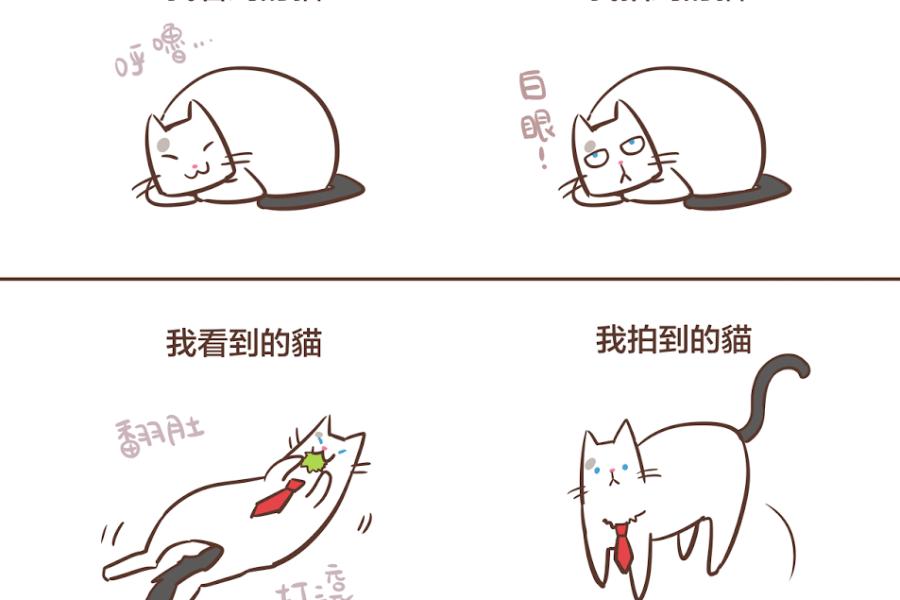 我拍到的貓