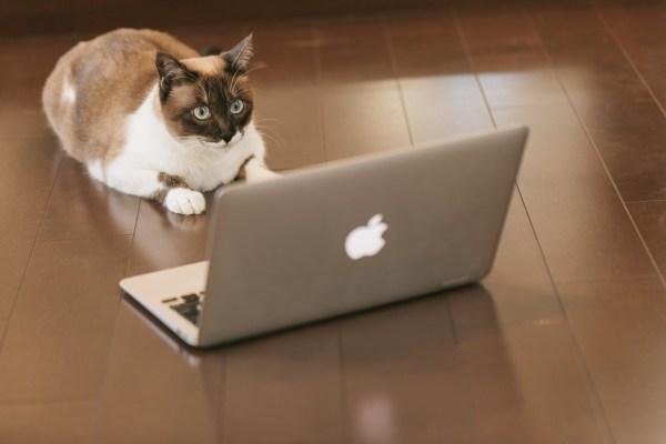 cat engineer