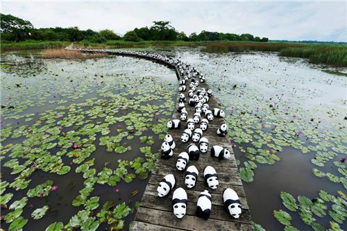1600 Pandas at Mai Po Nature Reserve