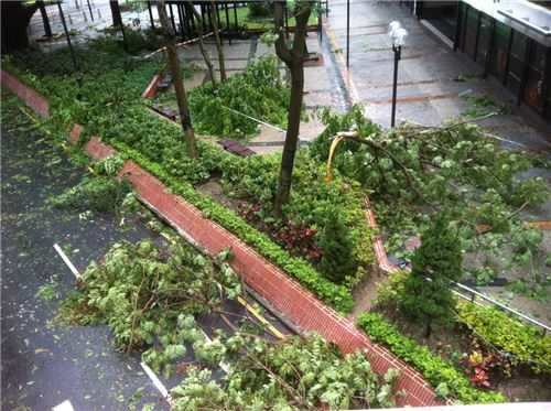 A typical view on the way to work today: Fallen trees everywhere